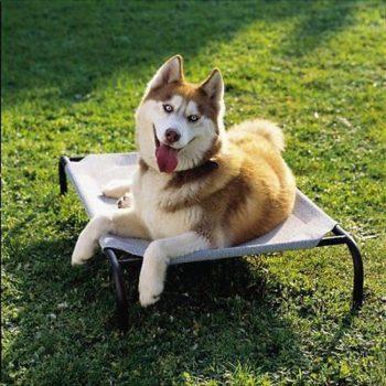 4Goodz Honden Ligbed Zand 112x66 cm