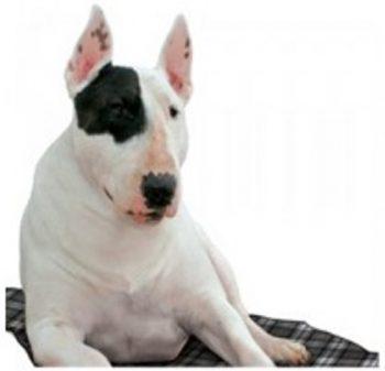 Aqua Coolceeper Verkoelende Hondenmat Grijs 60x80 cm
