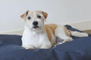 Frankie-Super-Dog-Hondenkussen-Antraciet-70×110-cm-1