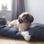 Frankie-Super-Dog-Hondenkussen-Marine-Blauw-70×100-cm-1