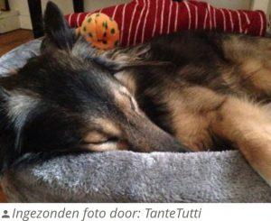 Petcomfort-Bontmand-Hondenmand-Grijs-70×70-cm-4