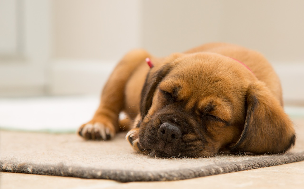 hondenmatten
